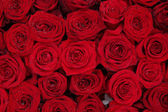 Big group of red roses — Zdjęcie stockowe