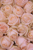 Pale pink wedding flowers — Foto de Stock