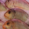 Gilt-head bream — Stock Photo #38040893