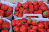 Erdbeeren in feldern — Stockfoto