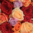 Mixed bridal roses — Stock Photo