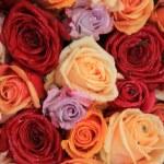 Mixed bridal roses — Stock Photo #41604741
