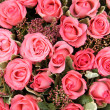 Group of Pink roses — Stock Photo #41605077