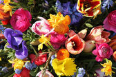 Spring flowers in bright colors — Stock Photo