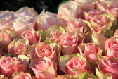 Pink roses in a bridal arrangement — ストック写真