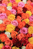 Multicolored wedding roses — ストック写真