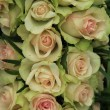 Pale pink roses in a wedding arrangement — Stock Photo #43817223