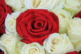 Red and white roses in a wedding arrangement — Stockfoto