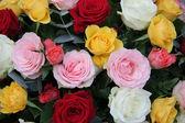 Mixed roses — Stock Photo