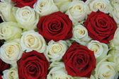Red and white roses in a wedding arrangement — Stock fotografie
