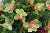 Green cymbidium orchids — Foto de Stock