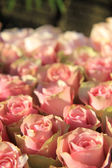 Pink roses in a bridal arrangement — Foto de Stock