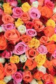 Multicolored wedding rosesm — Stock fotografie