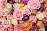 Pastel wedding roses — Stock Photo