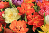 Multicolored tulip bouquet — Stock Photo