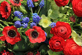 Spring flowers in red and blue — Stock Photo