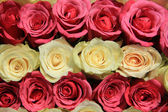Pink roses in different shades in wedding arrangement — Stock Photo