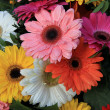 Gerberas in a colorful bridal bouquet — Stock Photo #44569291