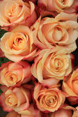 Multicolored wedding roses — Foto Stock