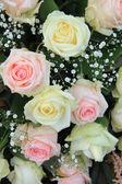 Rose bianche e rosa — Foto Stock