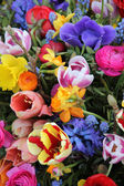 Mixed Spring Flowers — Foto de Stock
