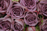 Purple roses in a wedding arrangement — Stock fotografie