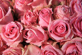 Pink roses in bridal bouquet — Foto Stock