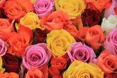 Multicolored wedding roses — Foto de Stock
