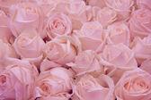 Pale pink wedding flowers — Stock Photo
