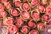 Pink roses in a bridal arrangement — Stock Photo