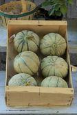 Melons at a market — Stock Photo