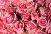 Pink roses in bridal bouquet — Foto de Stock