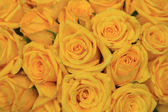 Yellow wedding roses — Stock Photo