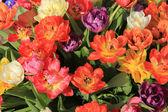Multicolored tulip bouquet — Stock Photo
