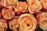Multicolored wedding roses — Stock Photo