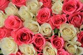 Acordo nupcial em rosa e branco — Foto Stock