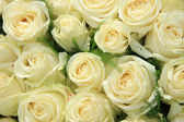 White roses in a wedding arrangement — Stockfoto