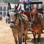 The Romeria de El Rocio, Andalusia, Spain — Stock Photo #13289637