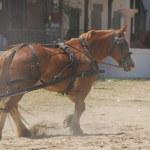 The Romeria de El Rocio, Andalusia, Spain — Stock Photo #13291033