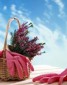 Mand met hulpprogramma's voor kamerplant en tuin — Stockfoto
