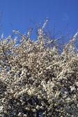 Spring time — Zdjęcie stockowe