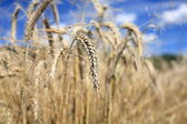 Agricultura — Foto Stock