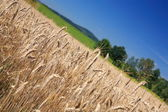 Agriculture — Stockfoto