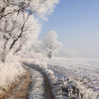 Winter scenery — Stock Photo #32701465