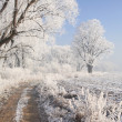 Winter scenery — Foto Stock