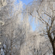Stock Photo: Winter scenery