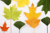 Various autumn leaves — Stock Photo