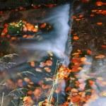 Water flow in autumn scenery — Stock Photo #32750847