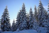 Paysages d'hiver — Photo