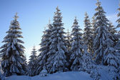 冬景色 — ストック写真